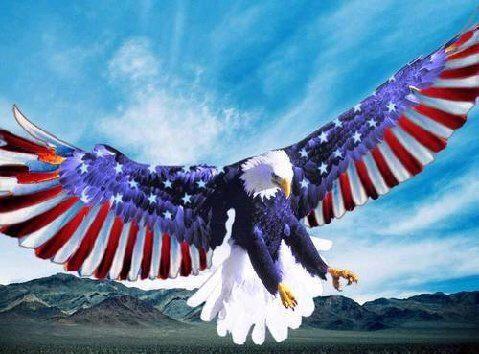 kigs 12 - murican eagle
